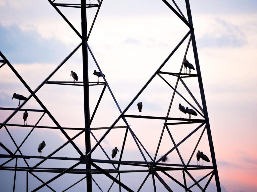 Birds on a tower